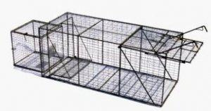 "Live Animal Trap With Live Box 20"" x 20"" x 48"" [401]"