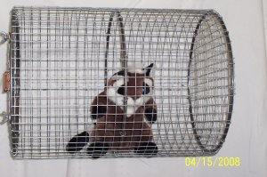 "Rolling Coon Cage 18"" x 24"""